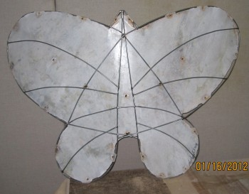 apollo butterfly Ghost