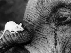 two friends; the mouse and the elephant.